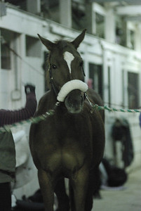 Photo class ( Horses) 010