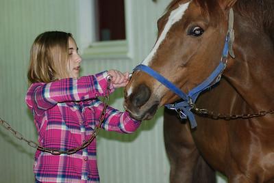 Photo class ( Horses) 003