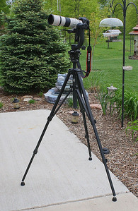"My ""Primary"" Bird Photography Equipment. One of these days I'll find a co-signor and purchase a Gitzo Tripod. But, for now, the cut-down Velbon Video Tripod works just fine. Visible in the background are a few of our bird-feeders and the little running water fountain. I wanted to build a stone bubbler with a little ""creek"" but, I just don't have the time, nor the 'Bosses' approval for that earth moving project."