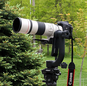 The 300mm, 1.4x and EOS 50D on the Wimberly Gimbal Head. Visible in the background are the woods to the south of our back yard.