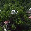 High Island Rookery - May 2013