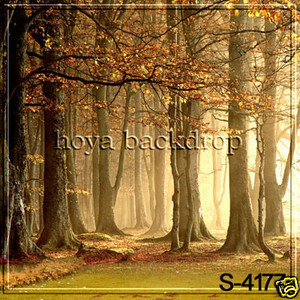 Fall scenic backdrop.  Type: vinyl approx 10 x 10 feet square.  $10 per instudio photoshoot $ 15 per day rental