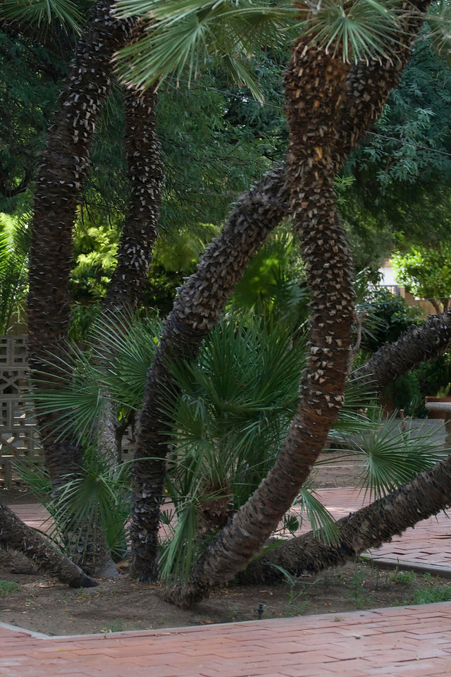 Phoenix Garden Center