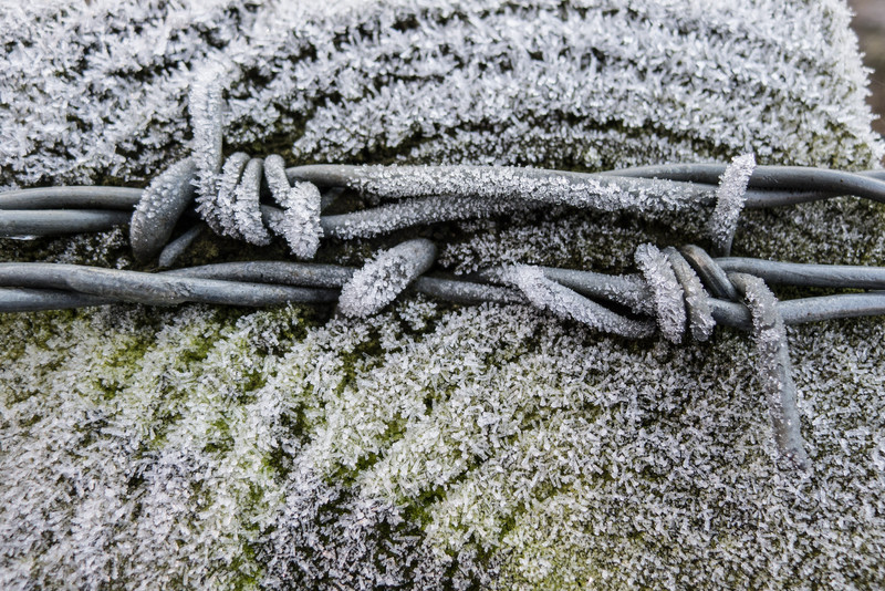 Wire in Frost