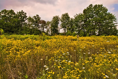 """Field of Gold"" Monday-9/7/09"