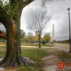 Another tree in the national mall fell victim to Sandy as well.