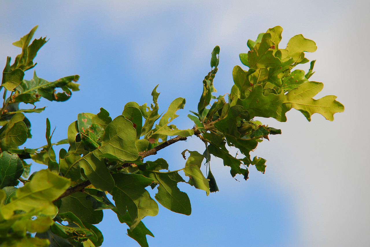 Tree leaves against the sky in Marble Falls, TX.
