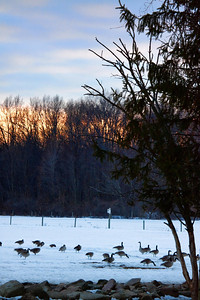 """The Winter Geese"" Wednesday March 3rd, 2010"