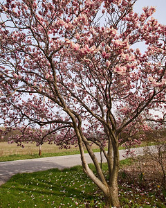 Monday April 12th 2010 The rest of the tree!