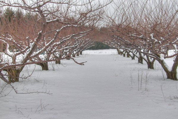 Easy Pickins Winter