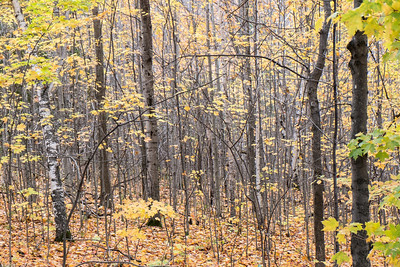 Infinite Hanging Leaves