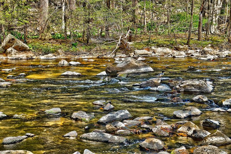 Hidden Merganser in the South Branch of the Raritan River, Ken Lockwood Gorge<br /> <br /> HDRI<br /> <br /> Spring 2012