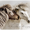 Horses living in the wild form strong bonds with each other.  It is deeply moving,  an honor to witness, and a joy to photograph.
