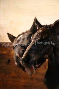 foal birth 570