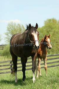 Mares and Foals 295