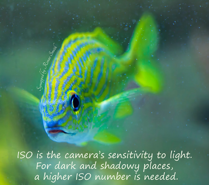 ISO Photography Tip