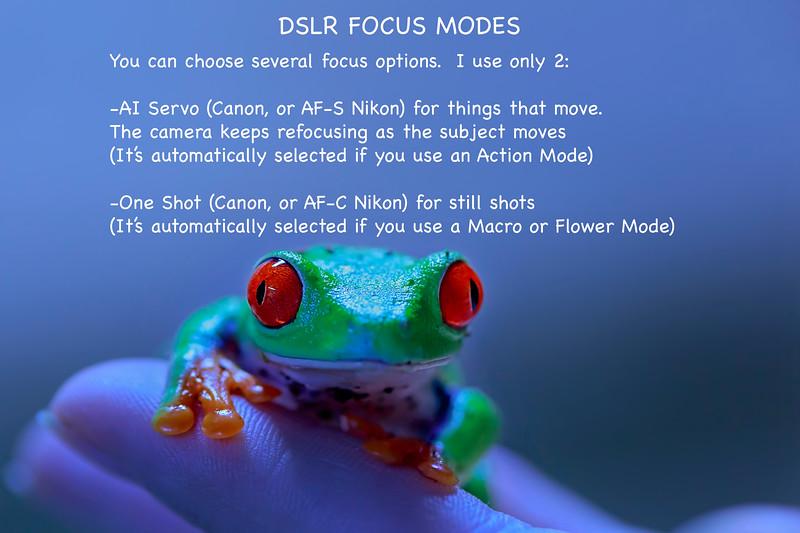 DSLR Focus Modes