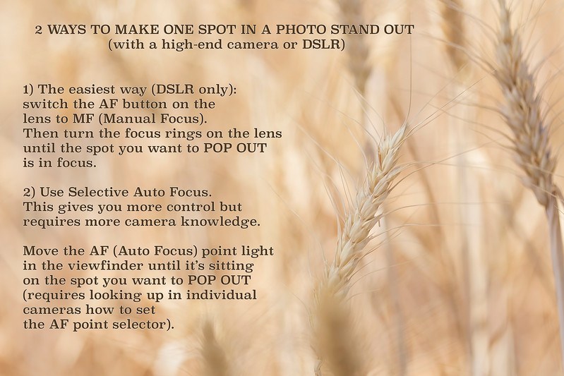 Aperture priority -- your smallest F-stop number for starters