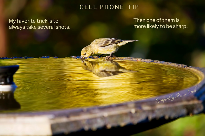 Cell Phone Tip