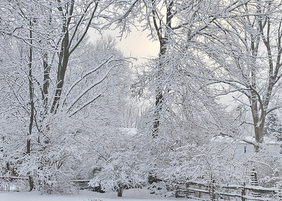 121229 Back Yard in Snow