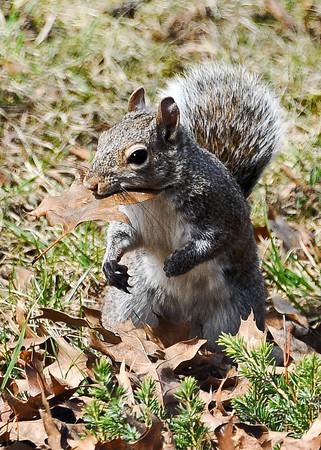 150322 Squirrel