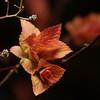 Spring leaves 2009