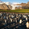 King Penguin Party