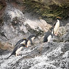 Macaroni Penguin Bath
