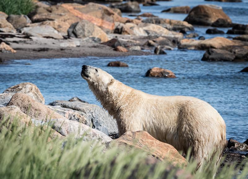 Bear on rocks