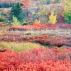 Fall Tapestry<br /> Maine