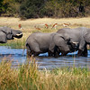 Elephants crossing the Channel