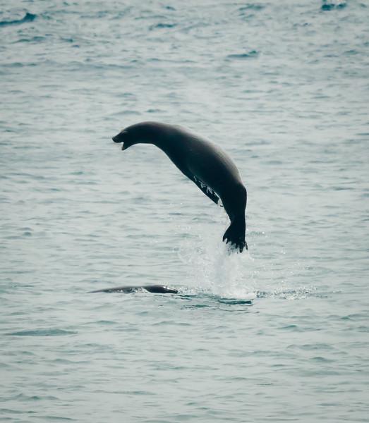 Sea Lion keep