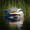 Blue Heron Bird Bath