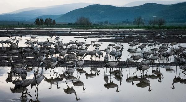 Israel Birding 2019