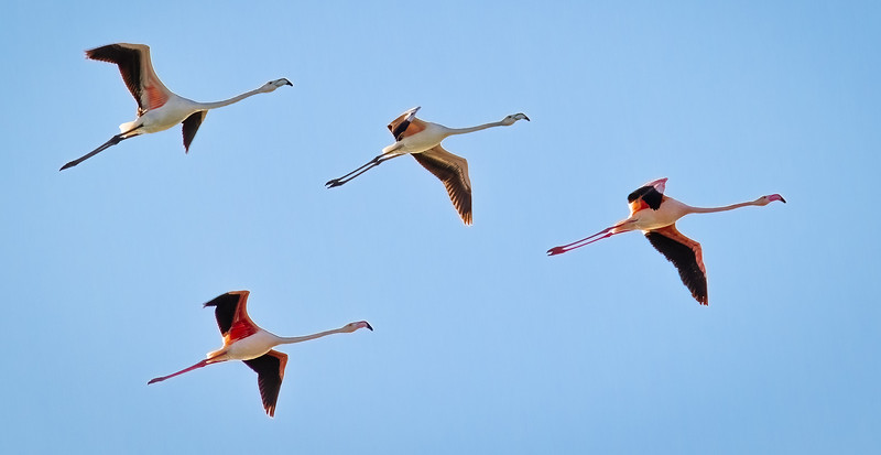 Flamingo Flyover