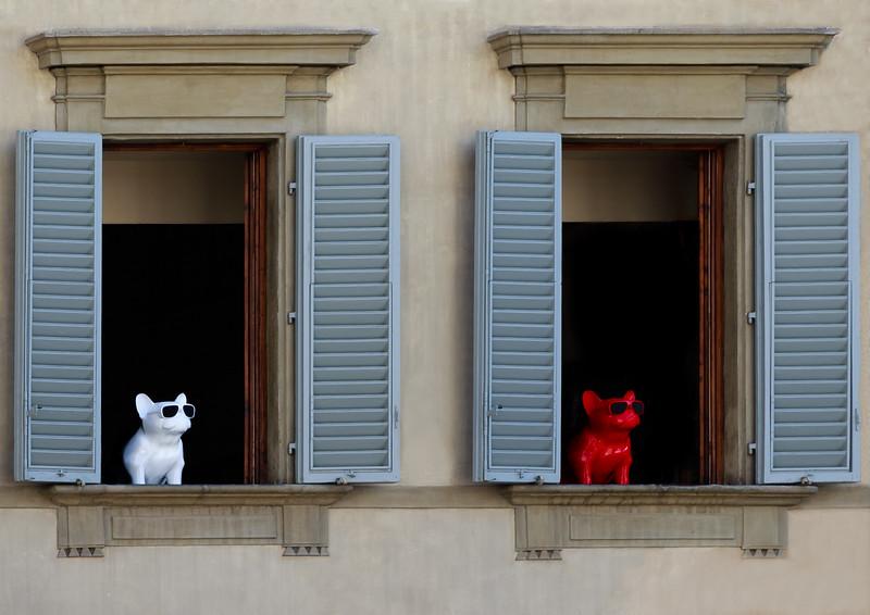 Doggies in the Window, Florence