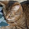 Garfield with on camera flash