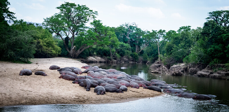 Hippo Beach, Serengeti