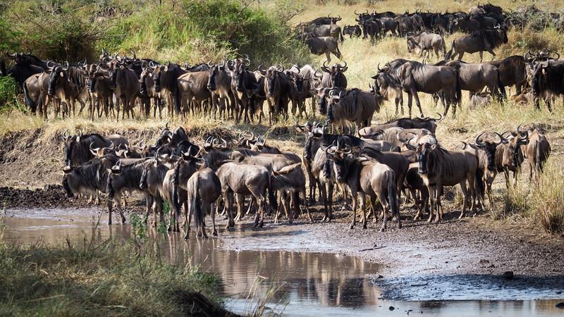 Migration #3, Central Serengeti