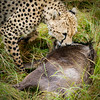 Fresh Kill, Masai Mara