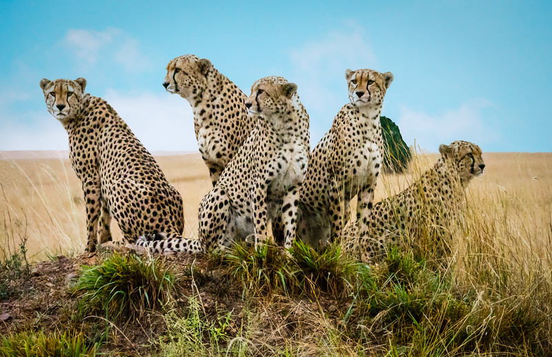 Five Brothers, Masai Mara