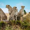 Five Brothers, Masai Mara