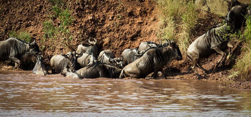 Migration #5, Serengeti