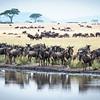 Migration #4, Serengeti