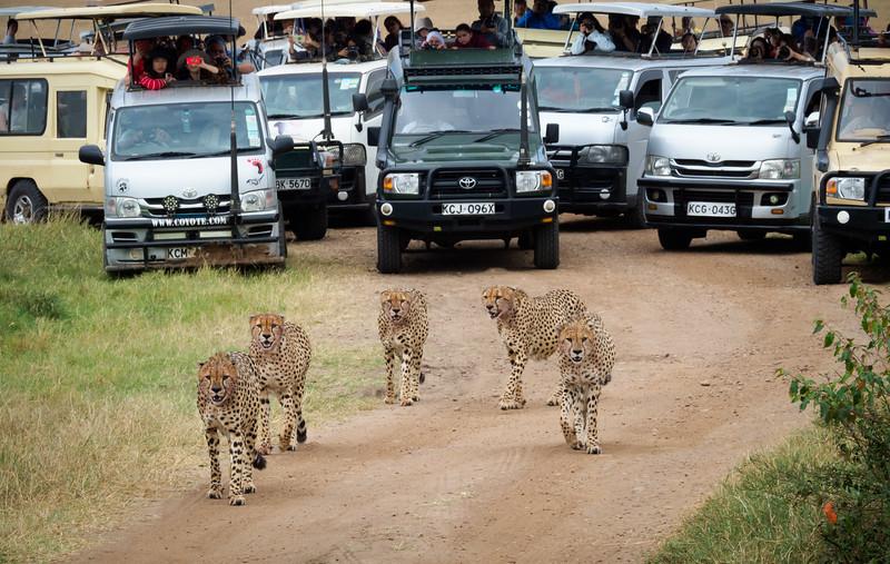 Traffic Jam, Masai Mara