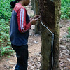 Rubber Plantation worker