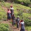 Tea Plantation Workers