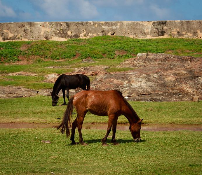 Horses near Fort Wall
