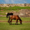 Horses near Fort Wall