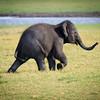 Baby Elephant, Minneriya